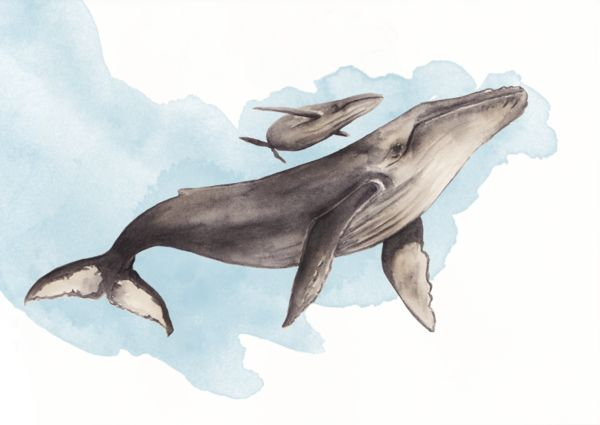 Humpback whale by Natali Rodriguez, via Behance