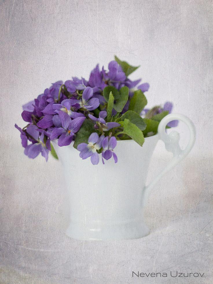 Nevena Uzurov - Small bouquet | Flickr - Photo Sharing!