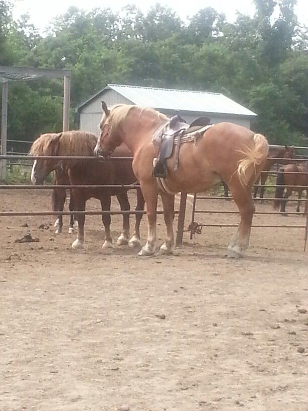 Horseback riding Clairville Ranch (Aug, 2014)