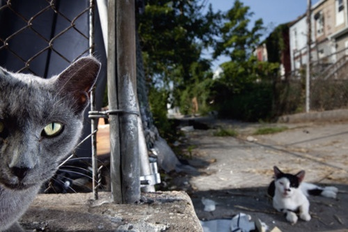 What's your problem?Cat Stats, Killers Cat, Street Cat, Baltimore Street