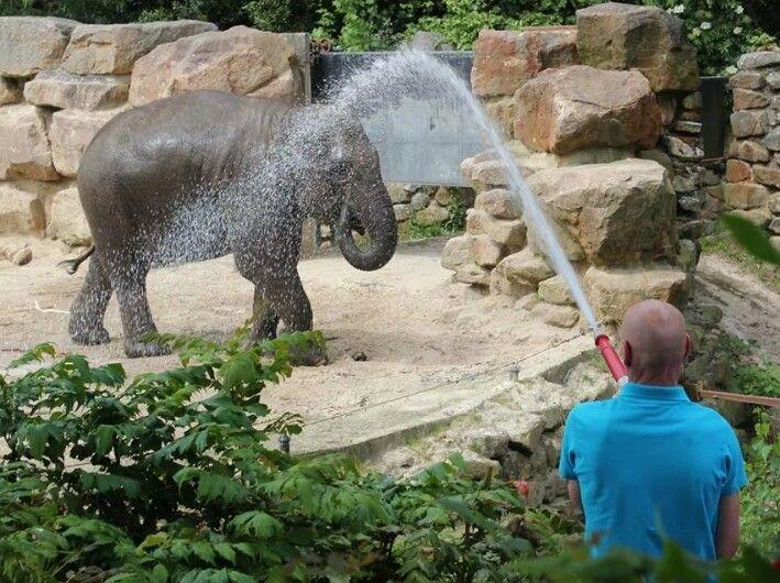 Verkoeling voor de olifant