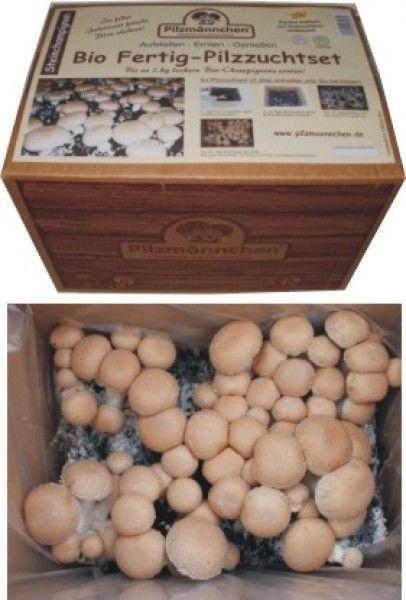 Steinchampignons züchten