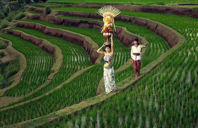 27 Pemandangan Sawah Terindah Di Indonesia 15 Pantai Terindah Di Indonesia Yang Wajib Dikunjungi Rute Bandung Solo Dan Seba Di 2020 Pemandangan Fotografi Alam Bali