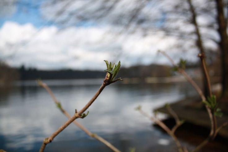 Spring flower #Wałcz