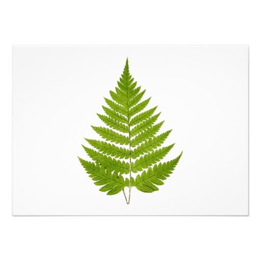 Fern Leaf Stencil About Our Company Amp People Blog With A