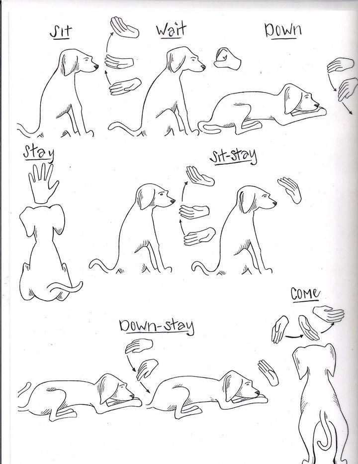 Rescue And Shelter Dogs Freedom Tails Hand Signs And Commands