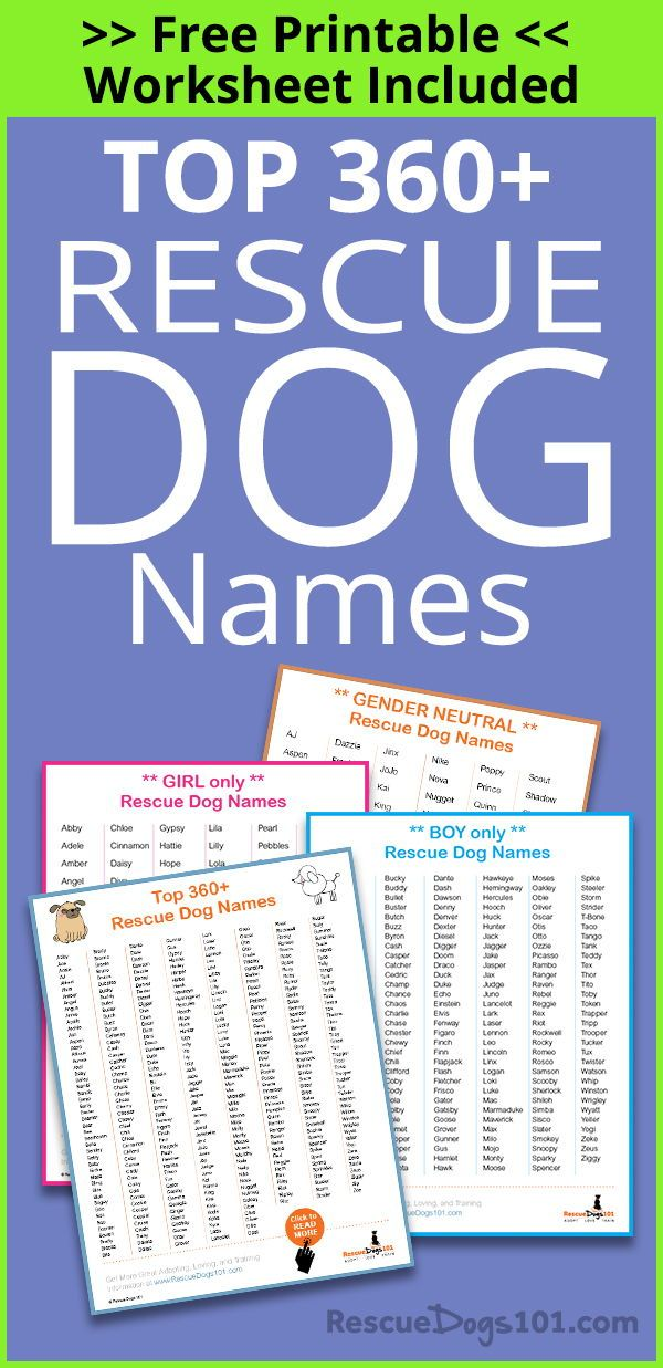Top 360+ Best Dog Names for Your Rescue Dog   Tips and