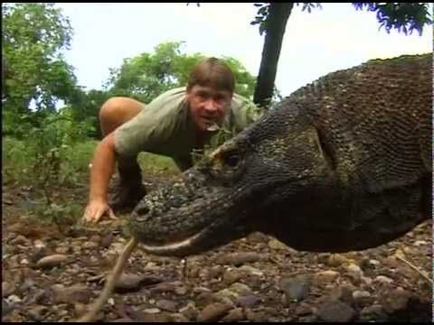 The crocodile hunter - Steve and the dragon - Teach ecology and wildlife conservation!