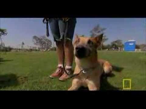 Dog Whisperer Aggressive Small Dog