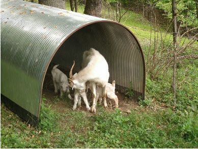 Outdoor Portable Goat Shelter Idea For Rotational Grazing