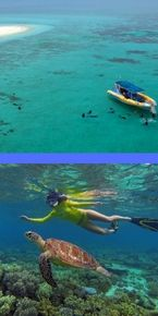 Great Barrier Reef Boat/ snorkel tour from Cape Tribulation
