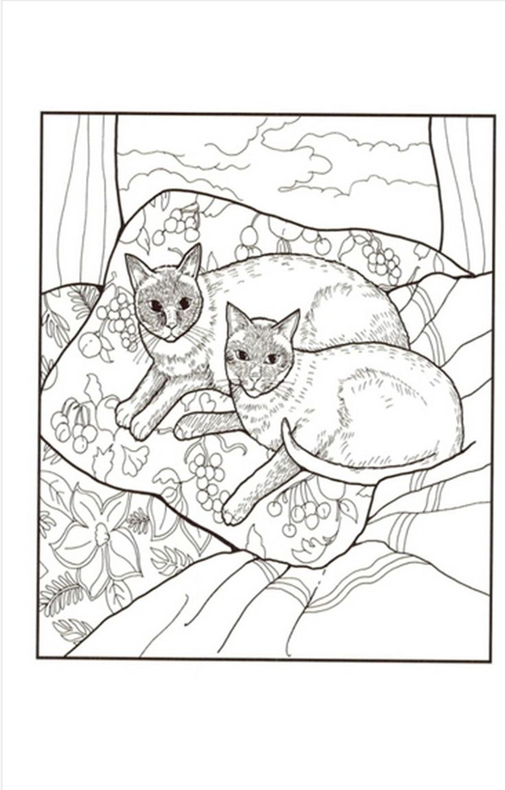 65 Best Cats Images On Pinterest Coloring Books Coloring Pages