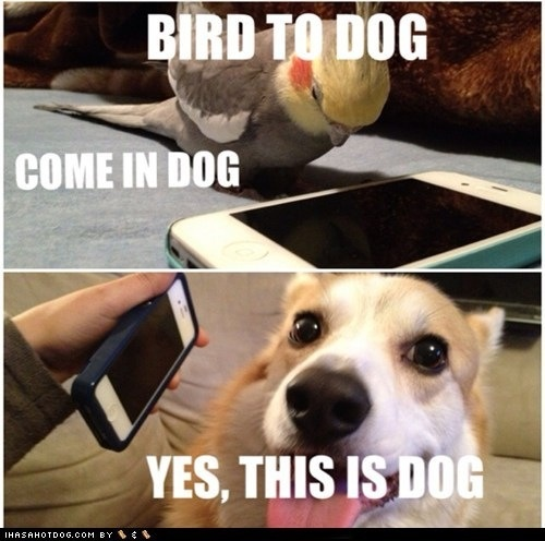 yes dog meme - photo #23