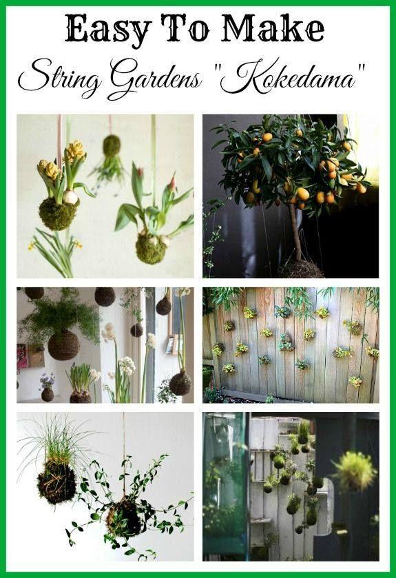 Diy string gardens kokedama frisky kokedama is for Indoor japanese garden plants