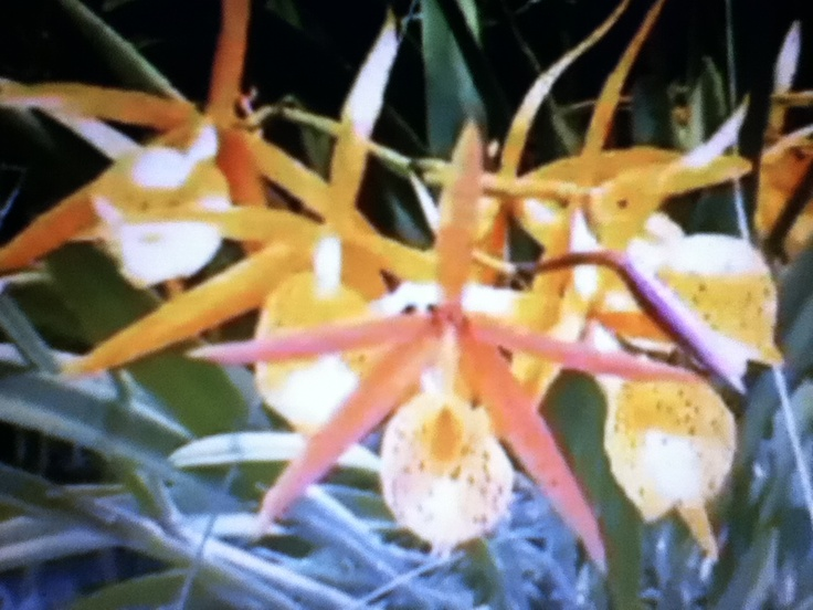 Orchid World - BarbadosTropical Flower, Caribbean Tropical, Tropical Plants