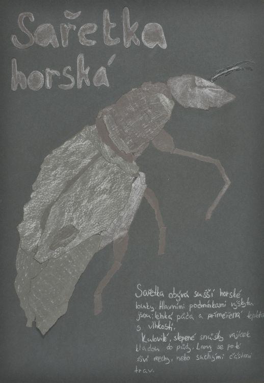 Medaile škole za kolekci kombinované techniky: Porubská Eliška (14 let), ZUŠ, Nové Město pod Smrkem, Česká republika