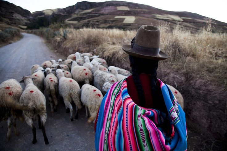 Traditionally dressed woman herds sheep down a road in Sacred Valley.
