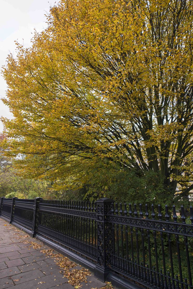 #Autumn #Tree in #London. If you need any help around your property Melchior Gray is a London-based property maintenance company. We specialise in responsive maintenance, painting/decorating & small building projects. Call our team today on 020 7731 2100 www.melchiorgray.co.uk Photography by ©DavidJensen