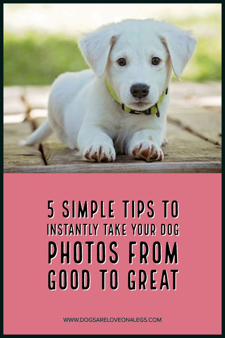 5 Simple Tops Top Instantly Take Your Dog Photos From Good To Great, Dog, Photograph, Photography, Dog Photos, Photography Tips