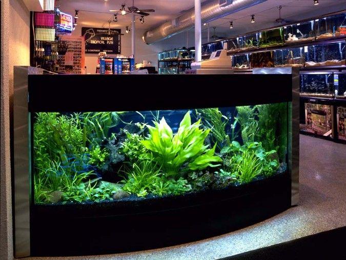 Planted aquarium ideas.