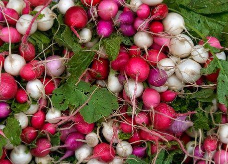 radishesFruit Gardens, Mothers Earth, The Body, Vegetables Gardens, Pickles Radish, Fraggle Rock, Easy Recipes, 10 Easiest, Easiest Vegetables