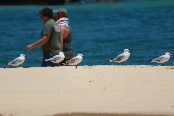 Is it wrong to be jealous of birds. Why do I have to leave the island and they don't? Good on 'em.