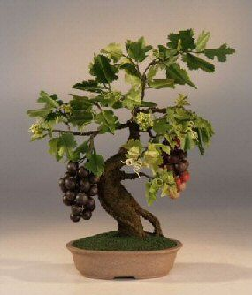 Artificial Wine Bonsai Tree $74.95 e1580-GE   The hand-painted fruit is so life-like that people will want to touch them to see if they are real or not. This artificial bonsai tree will retain its beauty for many, many years to come and can be cleaned with a slightly dampened cloth. This bonsai tree measures 9 in. x 8 in. x 12 in. and includes 120 buds, 94 leaves and 50 fruit.