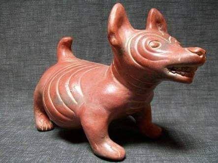 El origen del Chihuahueño - El origen del chihuahueño sigue siendo confuso, pero se sabe que a mediados del siglo XIX se encontraron ejemplares cerca de Casas Grandes, Chihuahua, de donde viene su nombre, y a diferencia del xolo se ha vuelto una raza muy popular en el mundo.