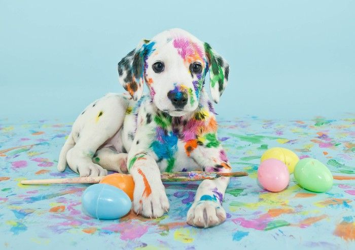 Easter Dalmatain Puppy Sticker • Pixers® – We live to change – Renee Somers