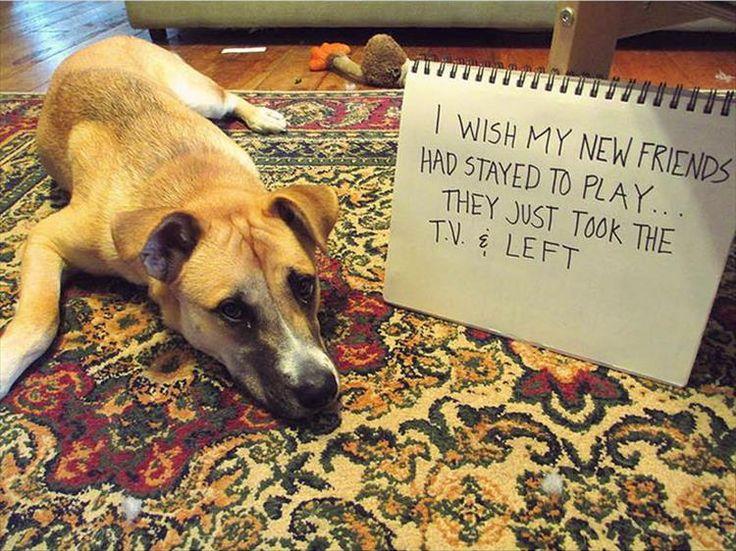 Best Dog Shaming Photos Ideas On Pinterest Dog Shaming - 21 hilarious dog moments