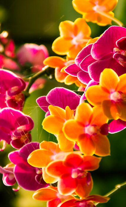 best  hawaii flowers ideas on   tropical, beach bum, Beautiful flower