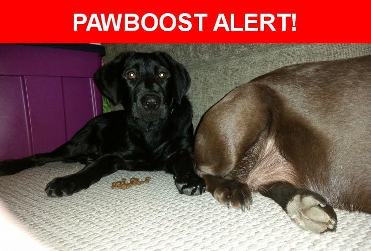 Please spread the word! Sadie was last seen in Arlington, TX 76018.    Nearest Address: Near Curtis Mathes Way & Arlington Highlands Blvd