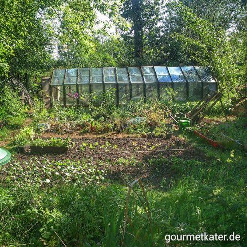 Gemüse-Garten #gardening #food