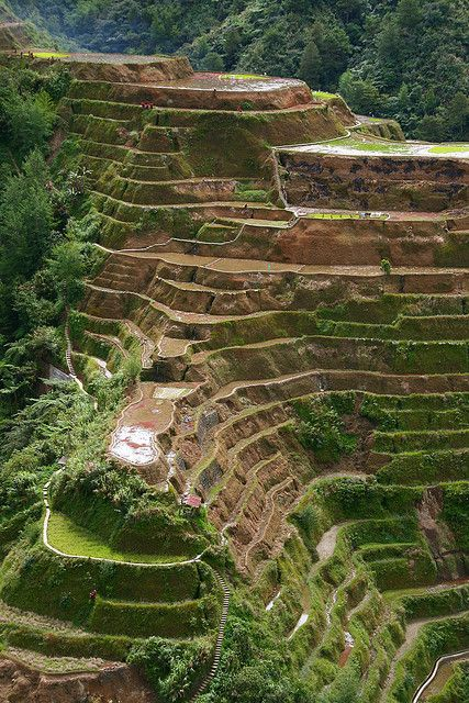 Banaue rice terraces - Phillipines, one of the 7 wonder of the World, located in the northern part of Luzon.