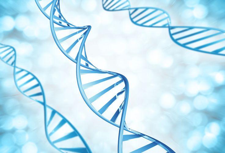 ¿Qué son los genes?