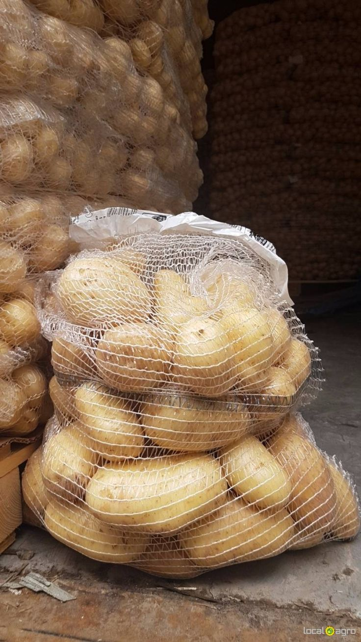 Local Agro Classifieds Yong (new crop) potatoes from Israel - VEGETABLES - MOSCOW - FREE INTERNATIONAL CLASSIFIEDS