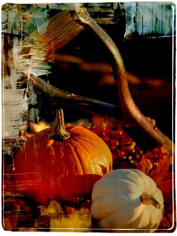 Export - Photo editor | PicMonkey: Free Online Photo Editing