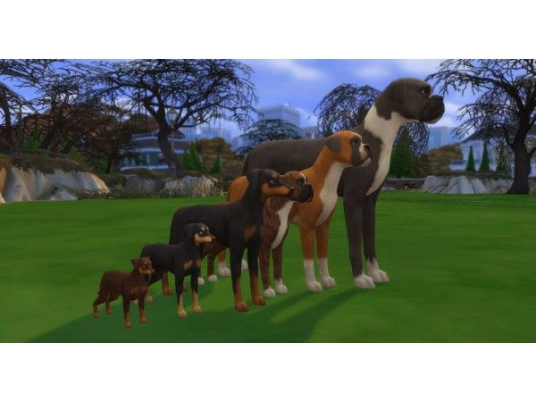 Dog Size Height Slider By Pixelpfote Sims 4 Pets Sims Pets Sims 4