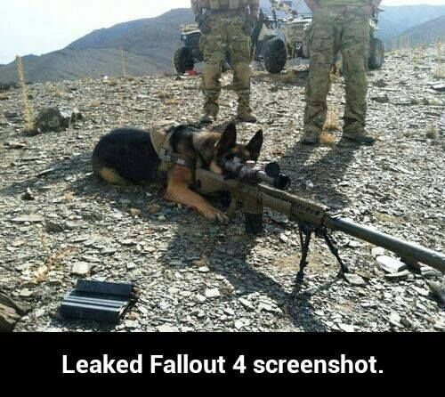 "Do you see the target?"" Bark fallout fallout 4 dogmeat fallout dogmeat twitter"