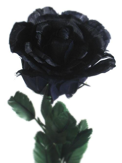 GROWING YOUR BLACK FLOWERS GARDEN