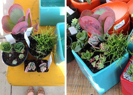 Indoor Succulent Gardens For Any Home