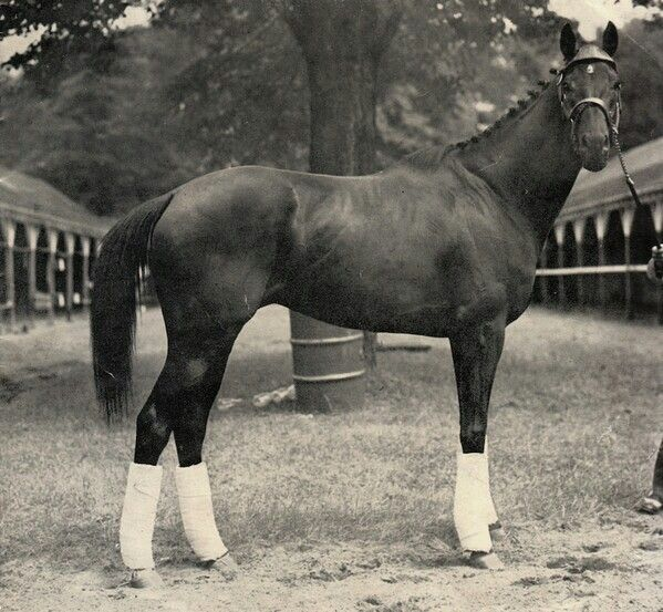 Noor - Defeated 2 Triple Crown winners, Citation and Assault.