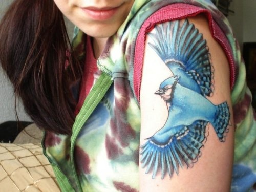 .: Arm Tattoo'S, Bluejay Tattoo'S, Color Bluebirds, Blue Jay Birds Tattoo'S, Bluebirds Tattoo'S, Blue Jay Tattoo'S, Tattoo'S Time, Blue Birds, Yellow Birds