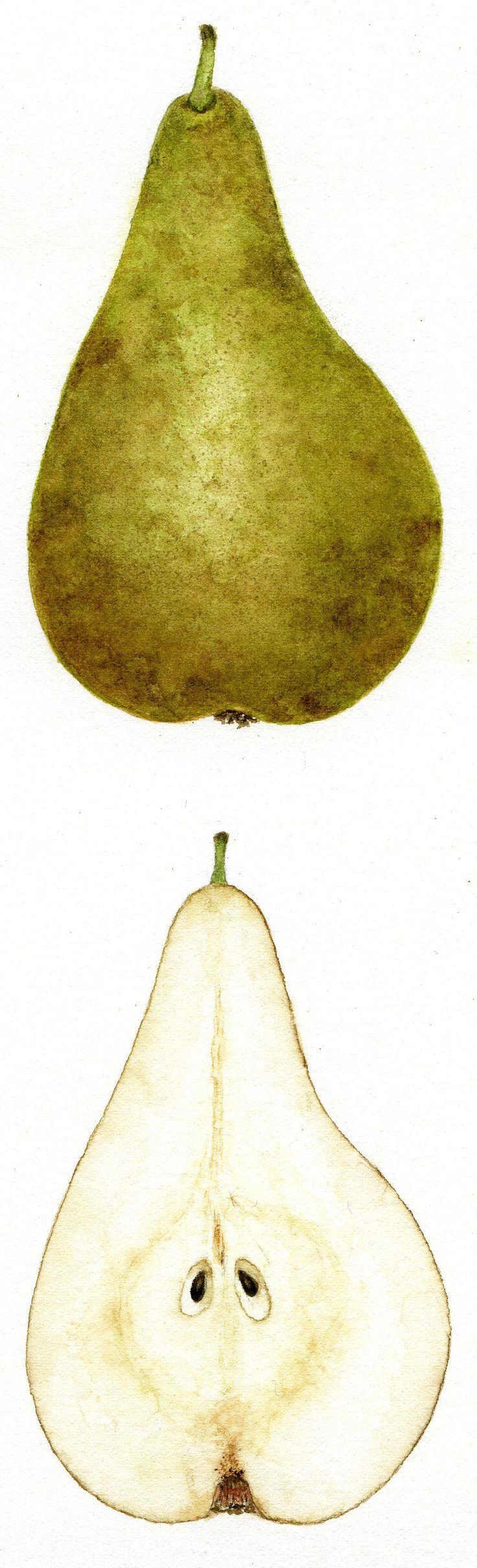 Pear © Jessica Frans