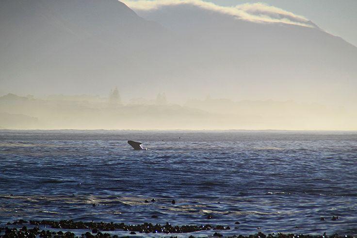 Whale Season in Hermanus © Tamlin Wightman
