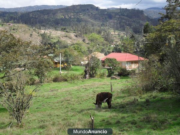 JENESANO-BOYACA, COLOMBIA