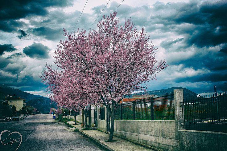2016-03-04 17.36.53-2 - DVJ CAPTAIN