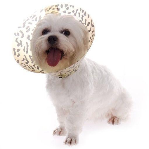 collar isabelino para perro