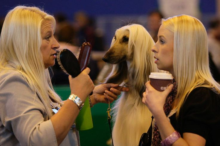 This dog looks like she is copying the 2 women's hairstyles