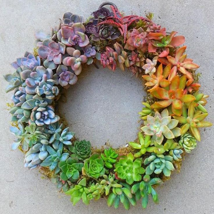 """Mi piace"": 3,080, commenti: 173 - The Succulent Source (@thesucculentsource) su Instagram: ""Rainbow wreath #need #SuckerForSucculents @jenssuccs ✔️"""